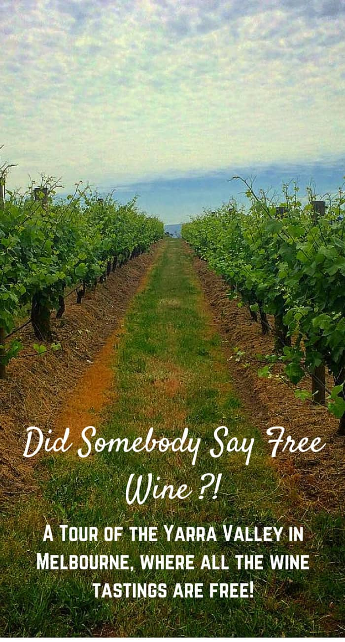 Did Somebody Say Free Wine?! Join me on a tour of the Yarra Valley, Melbourne