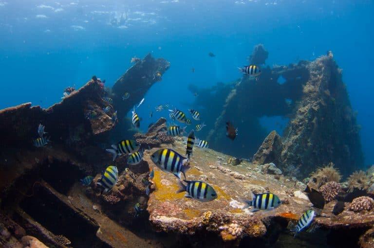 Adventure Series - Wreck Dive