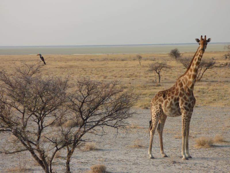 10 reasons visit Namibia 15 stunning photographs
