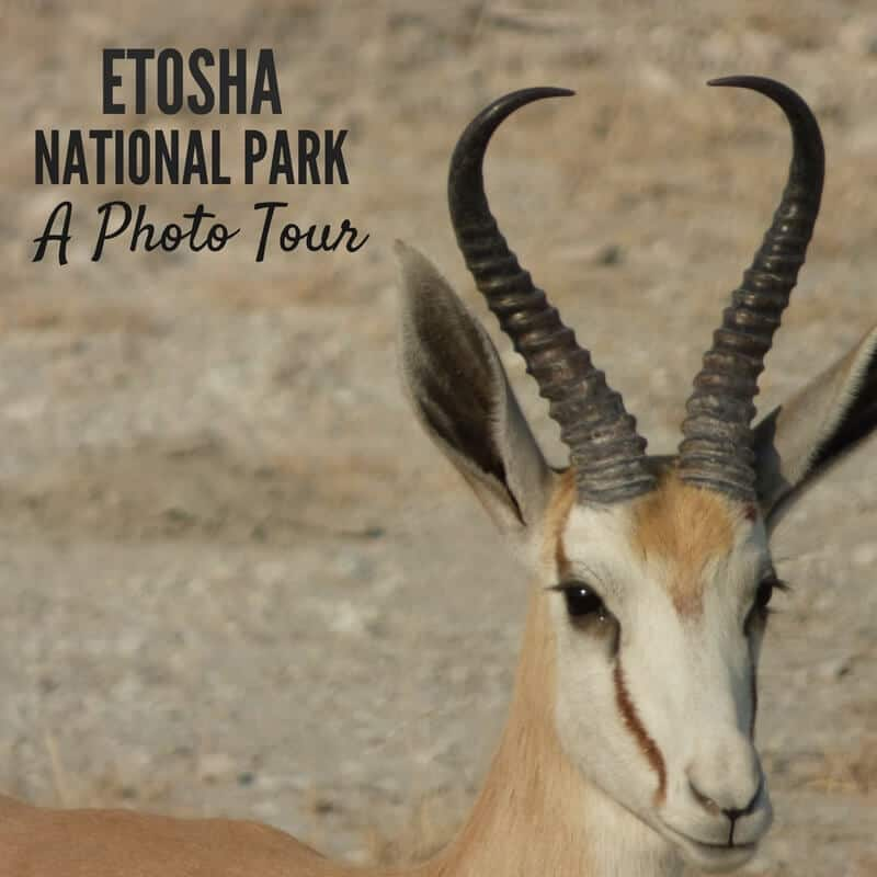 Etosha National Park Namibia Photo Tour