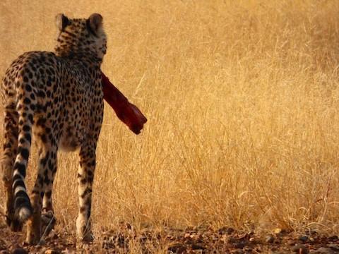Namibia Cheetah Sanctuary Lumix FZ70