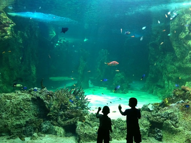 Things To Do in Sydney With Kids