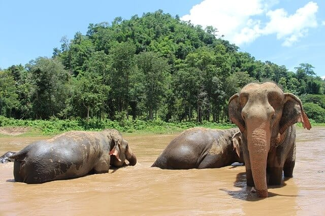 Elephants in Chiang Mai