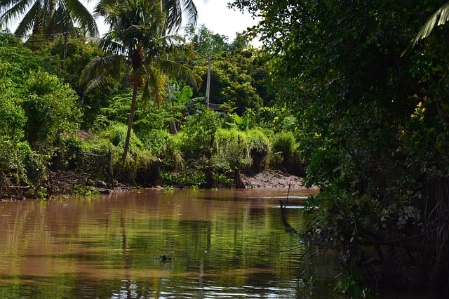 Things to see in Hoi An - Nipa Palms