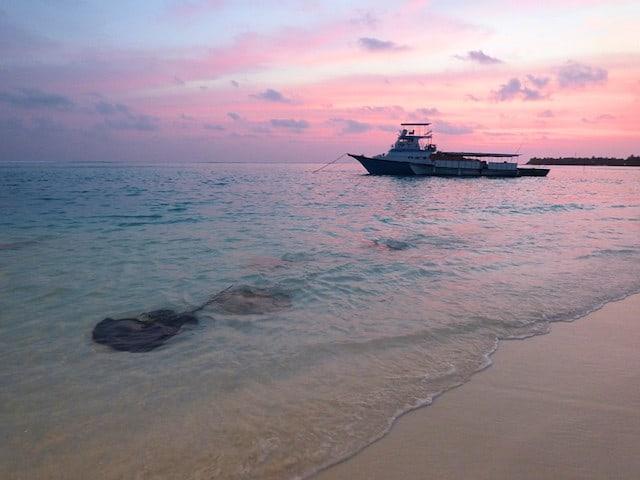 Stingrays at Sunset @ Sun Island Resort & Spa