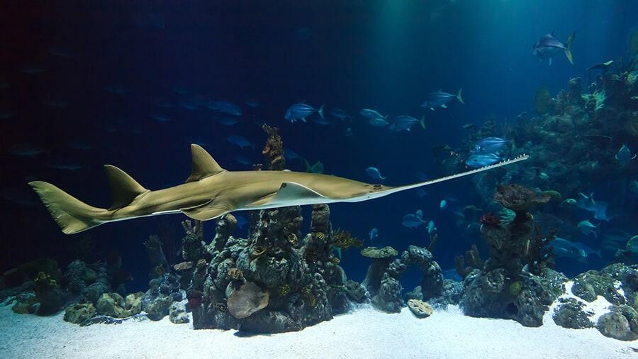 Places to visit in KL - the aquarium