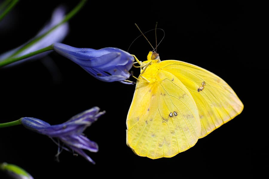 Things to do in KL - visit the Butterfly Park
