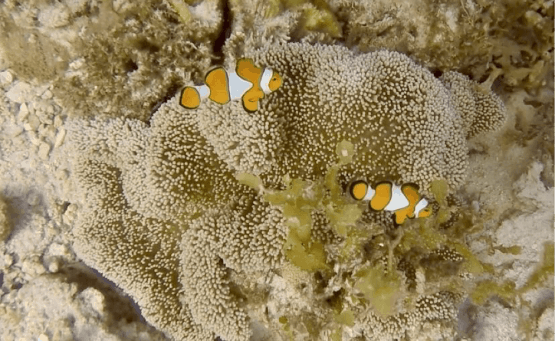 Scuba Diving in Palawan