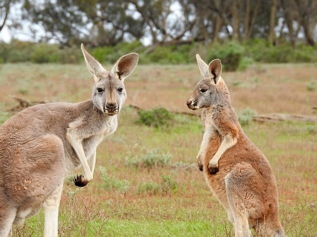 Australian Wildlife Tour