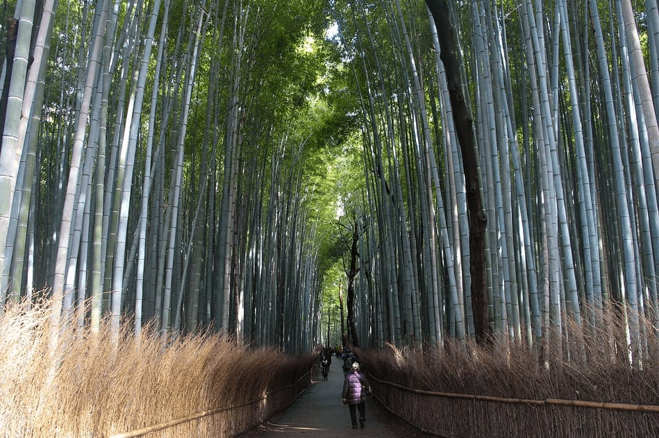 What to visit in Kyoto - the Bamboo Forest