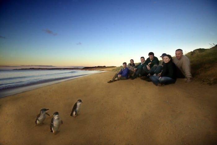 Penguin Parade at Phillip iIsland