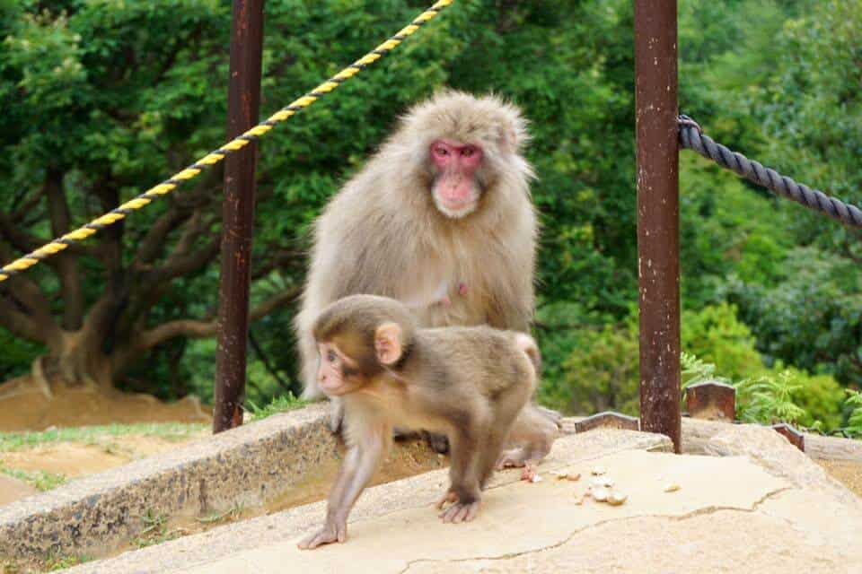 Kyoto Highlights - the Monkey Park