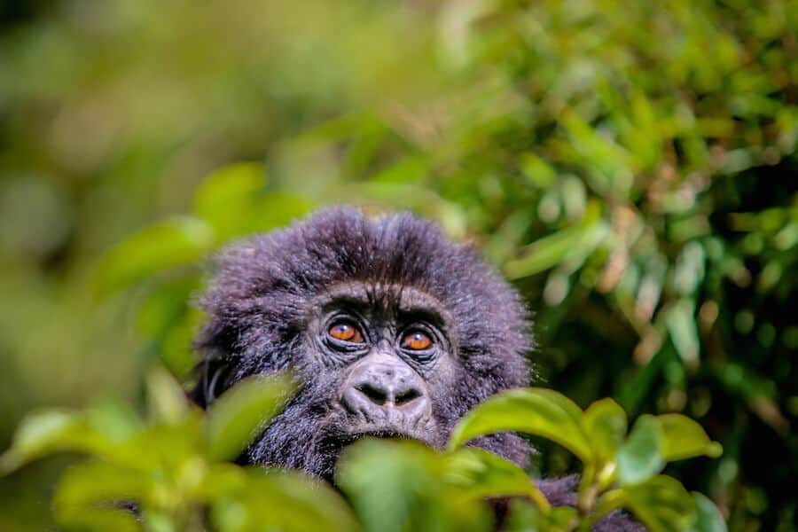 Places to Visit in Africa - Rwanda - add it to your Africa Bucket List!