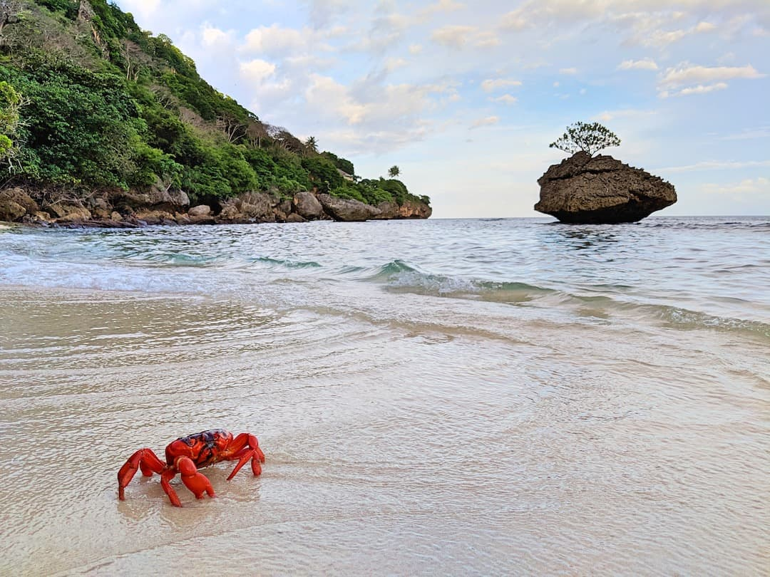Flying Fish Cove - Pirate Beach Christmas Island