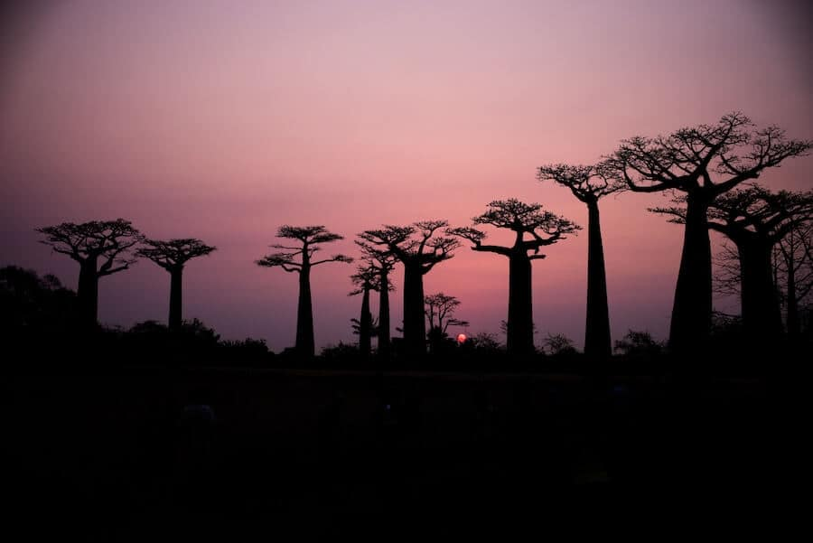 Best Places to visit in Africa - Madagascar