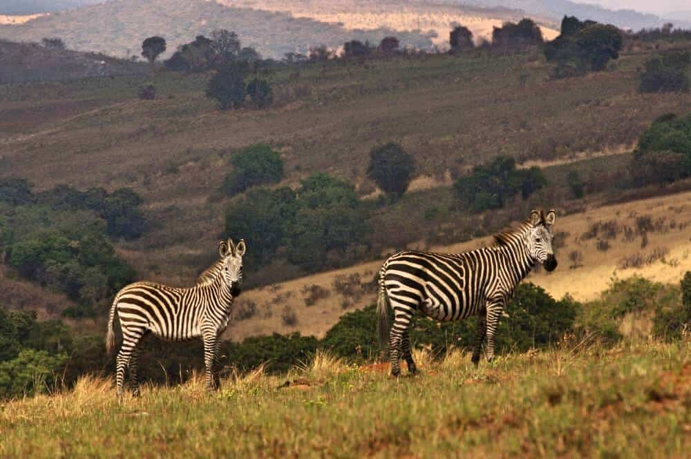 Malawi is one of the best places to visit in Africa