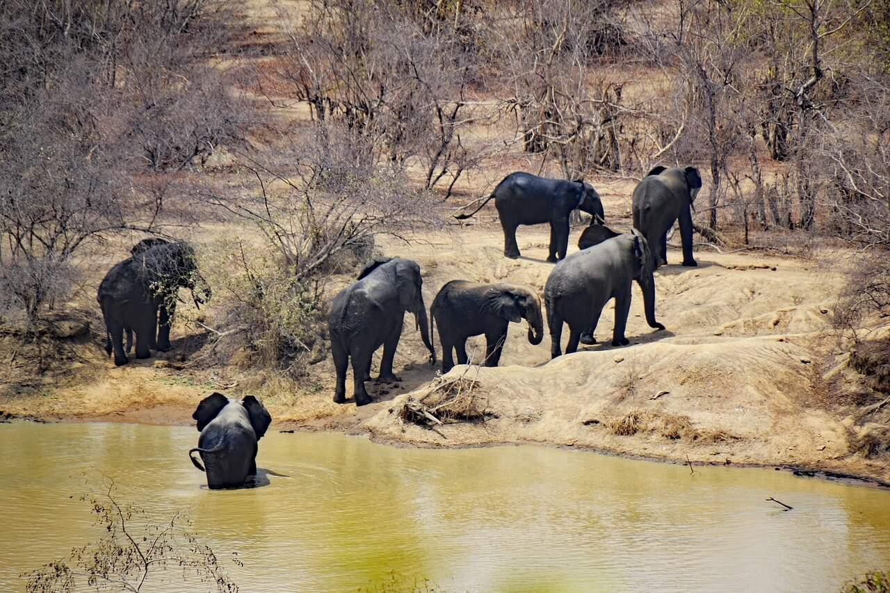 Mole National Park - Ghana
