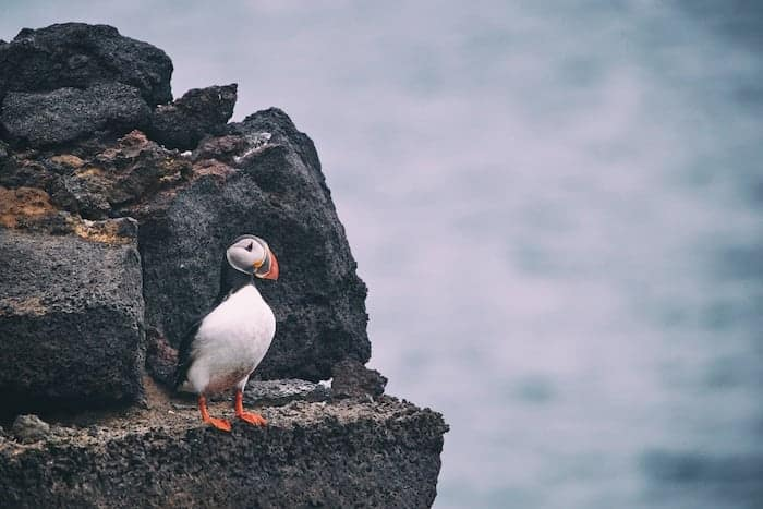 When is the best time to visit Iceland to see Puffins?