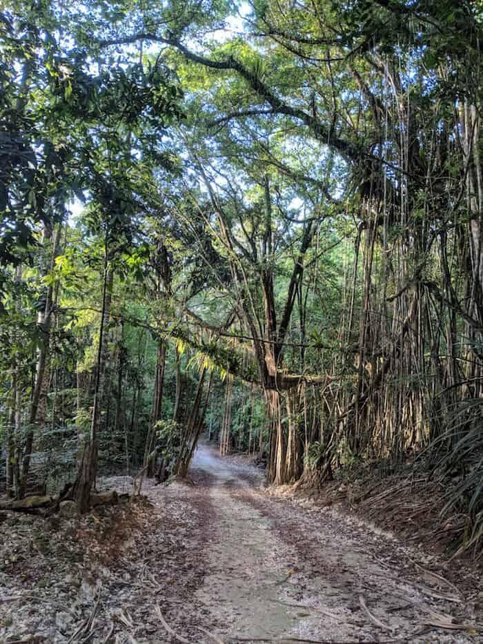 Welcome to the (Christmas Island) Jungle
