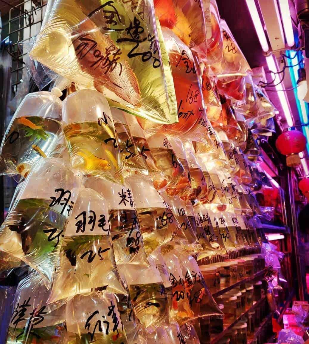 Goldfish Market Hong Kong
