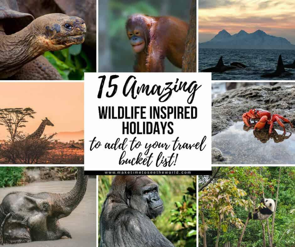 Amazing Wildlife Experiences Collage Image