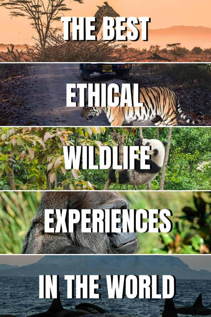 Best Wildlife Holidays and Ethical Animal Experiences