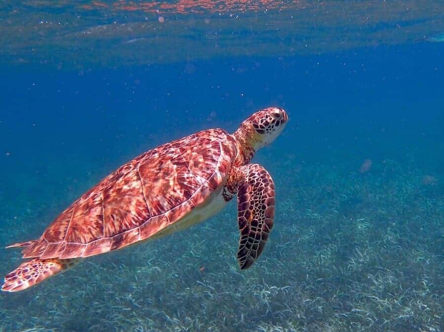 Turtles in Tenerife