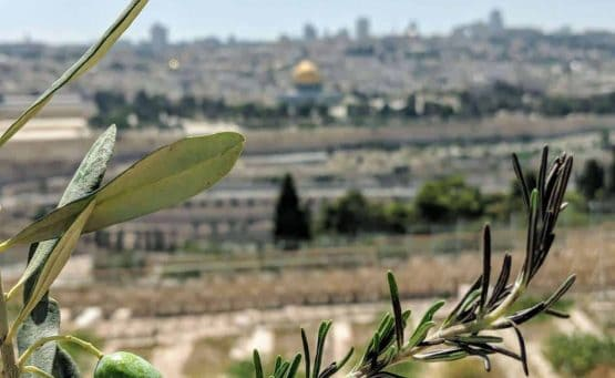 Tour Israel & Jordan - view from the mount of Olives across to Temple Mount