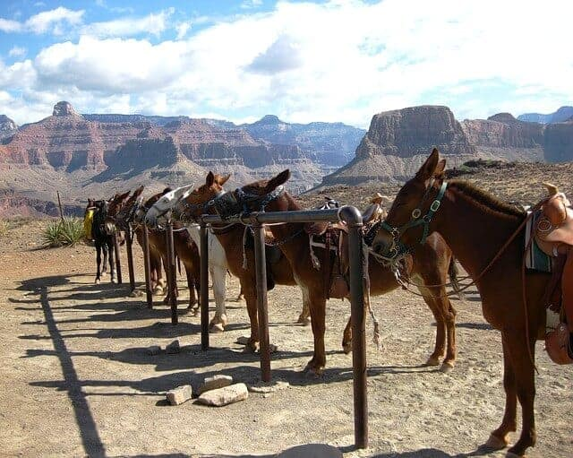 Wild West Horseback Tour