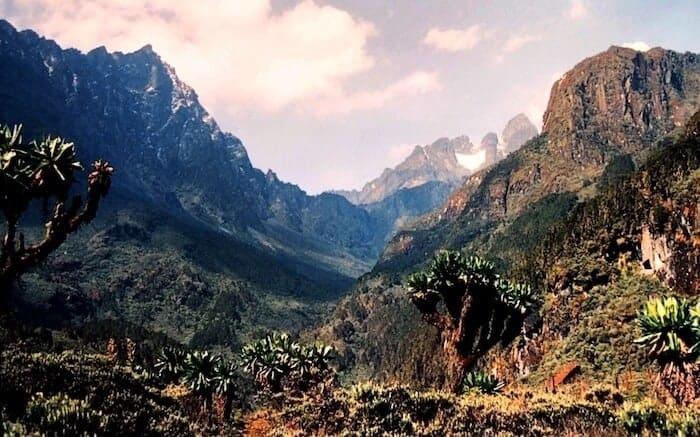 Rwenzori Mountains trekking