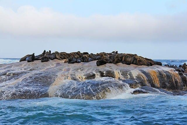 Druiker Island - also known as Seal Island in Cape Town South Africa