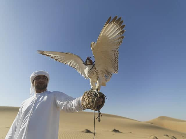Dubai Desert Falconry & Land Rover Tour