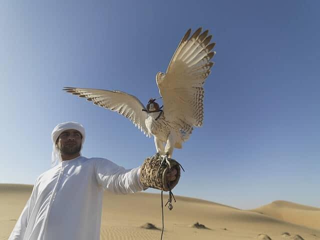 Dubai Desert Falconry & Land Rover Tour