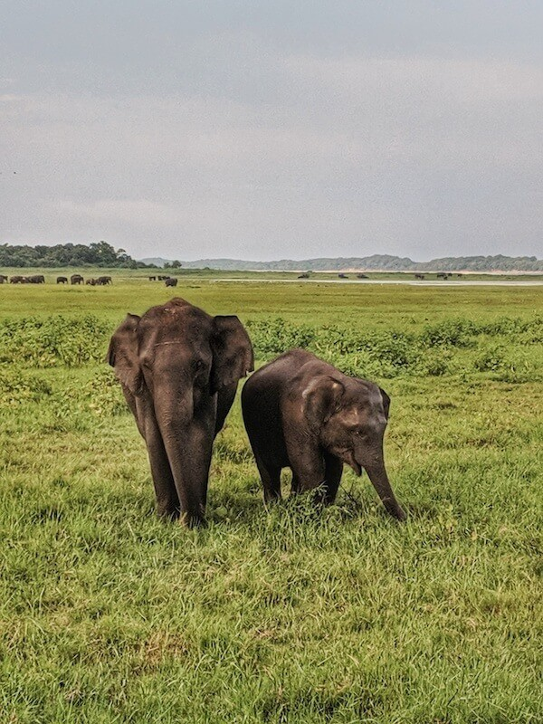 Elephants in Kaudulla National Park (c) MakeTimeToSeeTheWorld