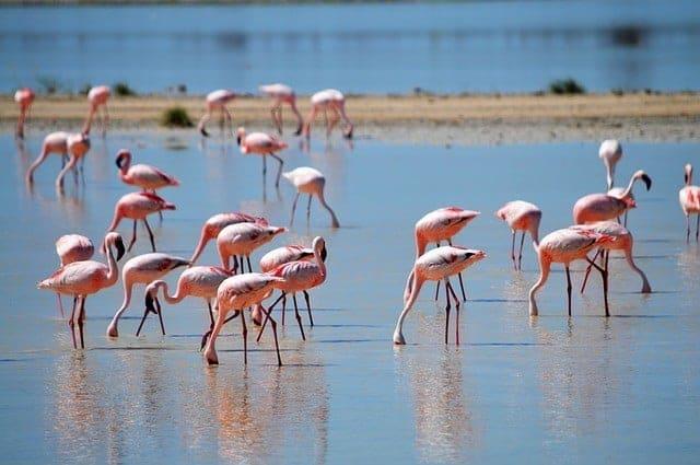 Flamingos in Khenifiss National Park