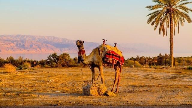 Palmerie Morocco