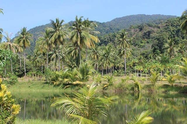 Ko Chang Rainforest