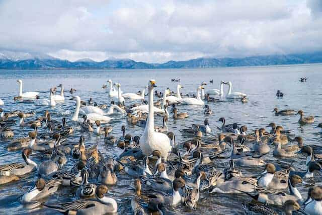 Lake Inawashiro / Swan Lake in Tohoku