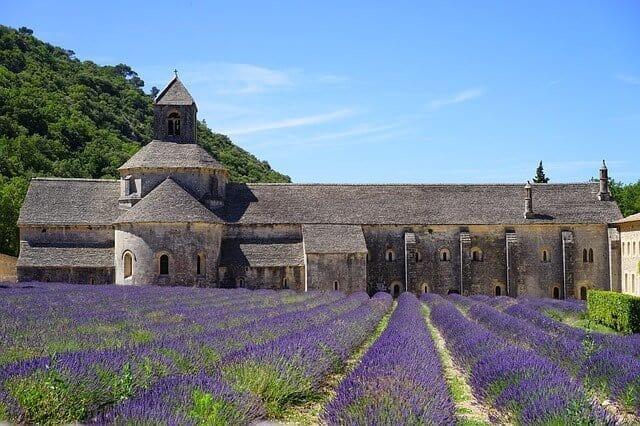 abbaye de senanque in lavender season (Provence)