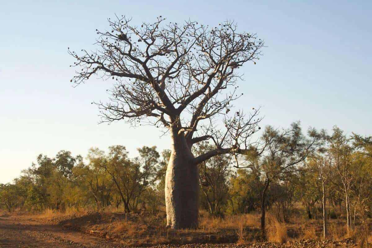 Things to do Kimberley Region Travel Guide