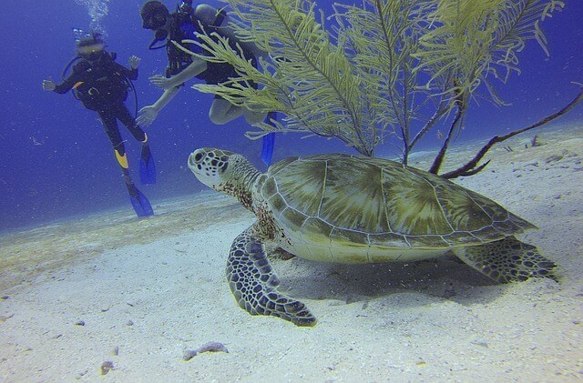 Scuba Diving in Antigua