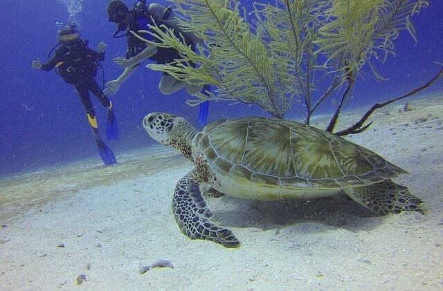 Scuba Diving in Antigua