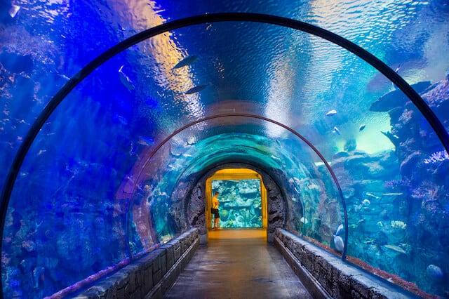 Underwater walkway at Shark Reef Mandalay Bay
