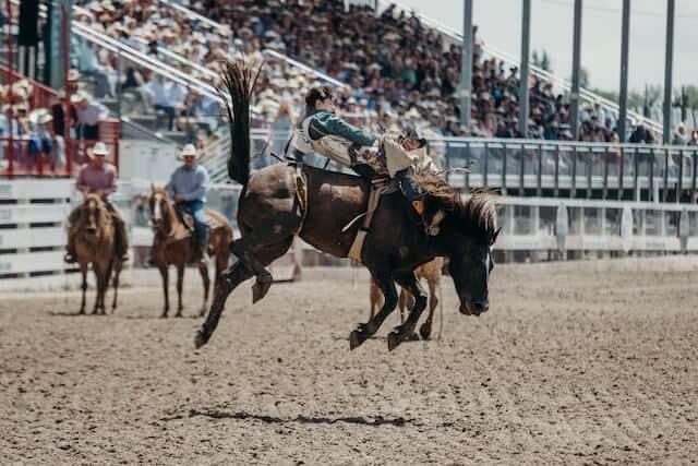 Bucking Bronco in Wyoming