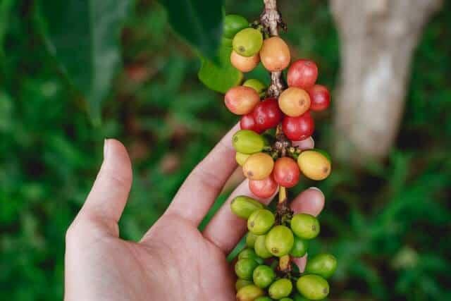 Coffee Tour Nairobi