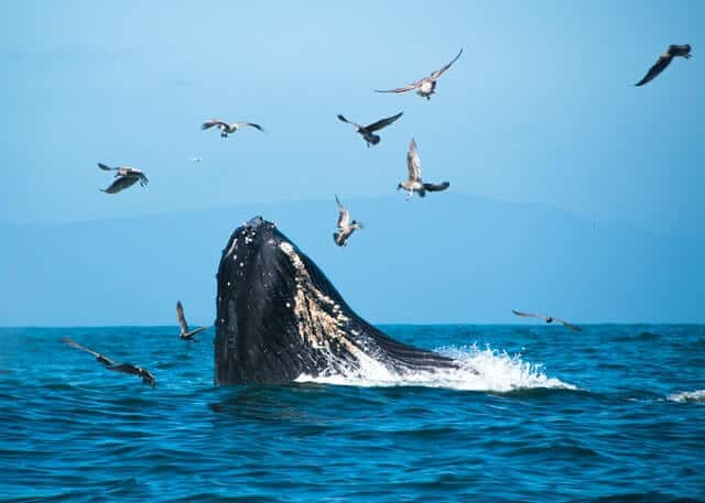 Humpack Whale in South Africa