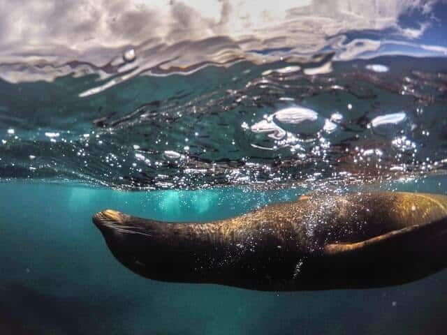 Seal Snorkeling in South Africa