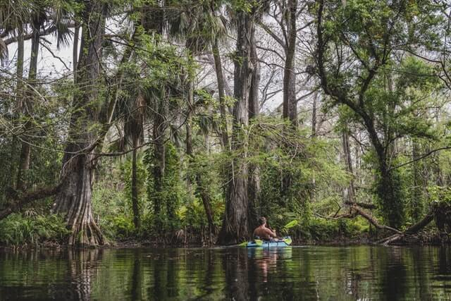 Man in a kayak paddling on the waterway surrounded by trees in Big Cypress National Reserve