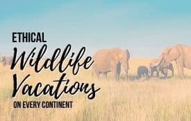 Link Tile: Ethical Wildlife Vacations on Every Continent