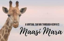 Link Tile: A Virtual Safari Through Kenya's Maasai Mara